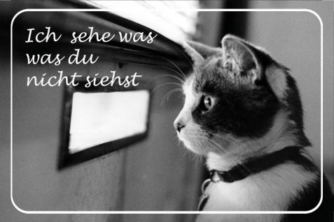 """"""" Ich sehe was du nicht siehst"""" spruchschild, katze, tier schild, blechschild"""