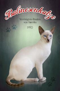 Schatzmix Blechschild Balinesen Katze USA 1950 Metallschild 20x30 cm Wanddeko tin sign