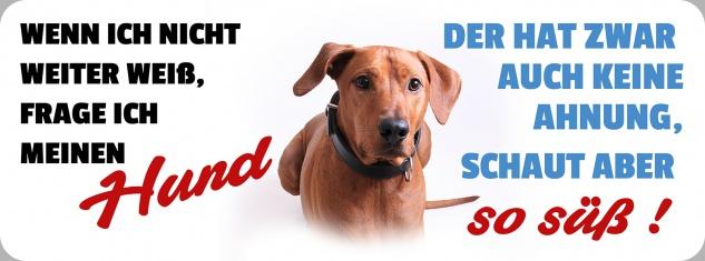 Blechschild Spruch Hund schaut aber so süß! Metallschild 27x10 cm Wanddeko tin sign