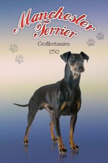 Schatzmix Blechschild Manchester Terrier Großbritannien 1750 Hund Metallschild 20x30 cm Wanddeko tin sign