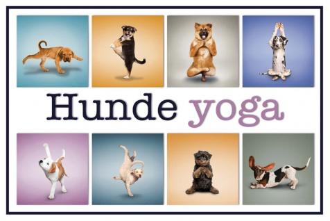 Schatzmix Blechschild Hunde Yoga 2 Metallschild 20x30 cm Wanddeko tin sign