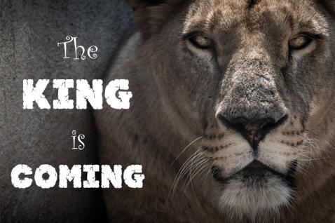 """"""" The king is coming"""" - löwe, spruchschild, blechschild, lustig,"""