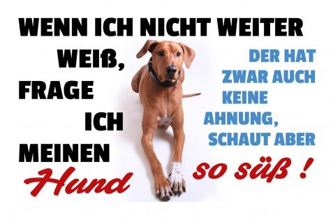 Blechschild Spruch Wenn ich nicht weiter weiß (Hund) Metallschild Wanddeko 20x30 cm tin sign