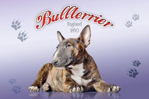 Schatzmix Blechschild Bullterrier England 1850 Hund Metallschild 20x30 cm Wanddeko tin sign