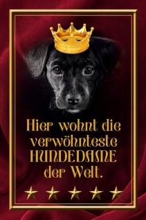 Blechschild Hund Hier wohnt die Hundedame Welt Metallschild Wanddeko 20x30 cm tin sign