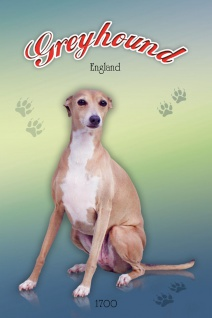 Schatzmix Blechschild Greyhound England 1700 Hund Metallschild 20x30 cm Wanddeko tin sign