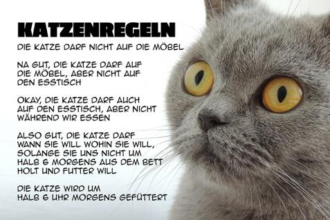 """"""" Katzenregeln"""" blechschild, lustig, comic, metallschild"""
