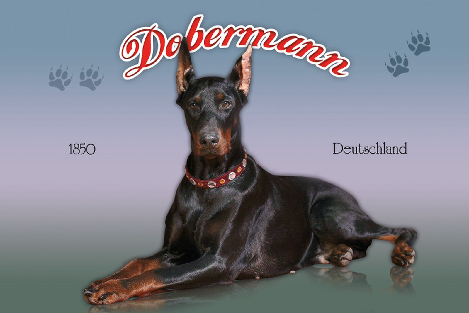 Türschild Dekoschild « Dobermann » Hund