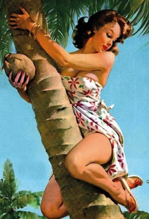 Nostalgie Pin up sexy Frau auf Palme Blechschild 20x30 cm