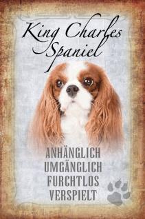 Hunde steckbrief: King Charles Spaniel Cavalier - anhänglich, umgänglich, furchtlos, verspielt blechschild
