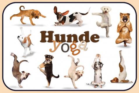 Schatzmix Blechschild Hunde Yoga 1 Metallschild 20x30 cm Wanddeko tin sign