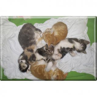 Kühlschrankmagnet - Katze Kätzchen - Gr. ca. 8 x 5, 5 cm - 38470 - Magnet Küchenmagnet