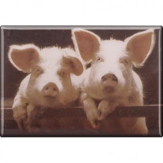Kühlschrankmagnet - Schweine Ferkel - Gr. ca. 8 x 5, 5 cm - 38334 - Magnet Küchenmagnet