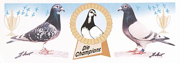 Auto-Aufkleber - Tauben Die Champions - Gr. ca. 22 x 8 cm - TB762/2