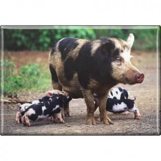 TIERMAGNET - Schweine - Sau mit Ferkeln - Gr. ca. 8 x 5, 5 cm - 38331 - Küchenmagnet