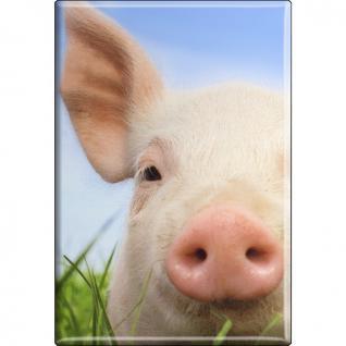 TIERMAGNET - Schweine Ferkel - Gr. ca. 8 x 5, 5 cm - 38333 - Küchenmagnet