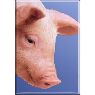 Kühlschrankmagnet - Schweine Ferkel - Gr. ca. 8 x 5, 5 cm - 38332 - Magnet Küchenmagnet