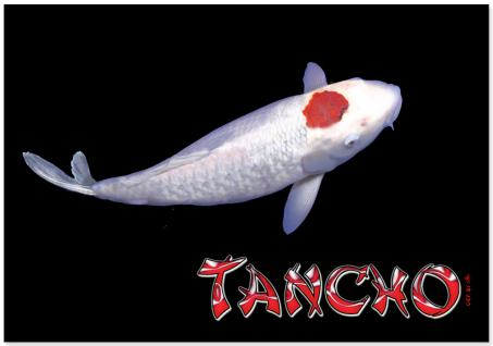 Platzdeckchen - Fisch Koi Tancho - Gr. ca. 40cm x 28cm - KO271