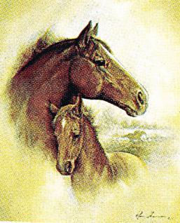 Aufkleber Sticker Applikation Pferd 8,5 x 8 cm Pferde Mecklenburger 307034