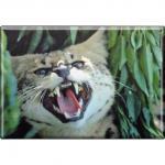 TIERMAGNET - Wildkatze Luchs - Gr. ca. 8 x 5, 5 cm - 37017 - Küchenmagnet