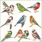 Servietten 20er Set - TISSUE mit Motiv - 10 Vögel- 33714 Gr. ca. 33x33cm