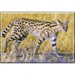 Kühlschrankmagnet - Wildkatze Luchs - Gr. ca. 8 x 5, 5 cm - 37018 - Magnet Küchenmagnet