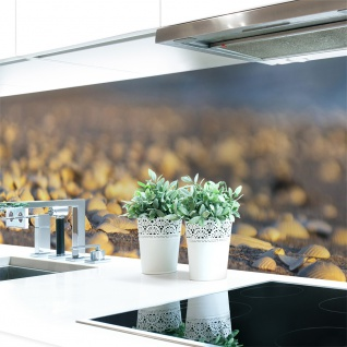 Küchenrückwand Muschel Strand Premium Hart-PVC 0, 4 mm selbstklebend - Direkt auf die Fliesen
