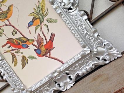 Gemälde Rahmen Blumen Vogel Tier Bilder 45x38 cm Kunstdruck Bild Wandbild
