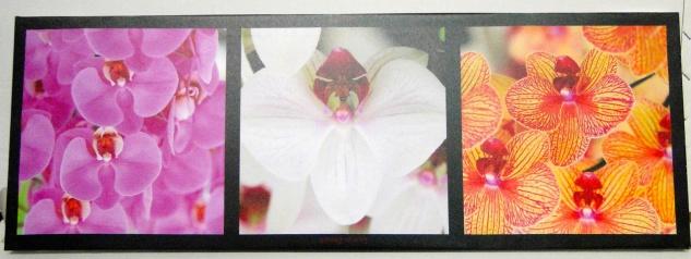 Bilder Leinwand Keilrahmen Bild Canvas digital Print Interieur Blumen 31x86