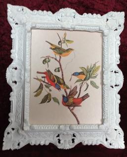 Bild mit Rahmen Antik Weiß Gemälde Vogel Wandbild Tiere 45x38 Paradies Vogel 4