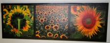 Bilder Leinwand Keilrahmen Bild Canvas Bilder SONNEN-BLUMEN 40X120 SUNFLOWER
