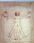 vitruvianischer mensch Leonardo da Vinci 50x35 Kunstdruck auf MDF Platte Gemälde