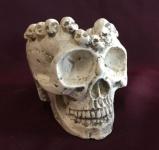 Totenkopf schädel Aschenbecher Natur 10x7 Skull Gothic Fantasy Figur Deko Skull