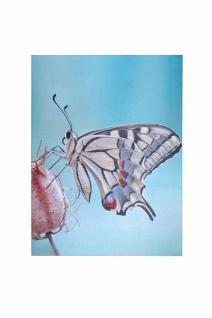 LED-Wandbild Schmetterling 3 Lämpchen Leinwand massivholz-Gestell Wanddeko