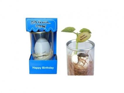 Zauber Bohne - Happy Birthday