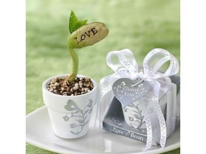 Bohne mit Love in Mini Pflanztopf