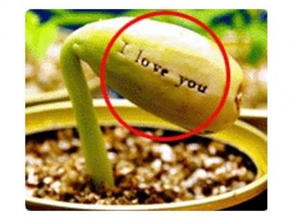 I LOVE YOU Bohne Ein Geschenk der Liebe
