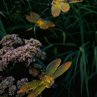 Assisi Solar LED Libelle Set 4-tlg. Solar Gartenlampe Gartenleuchte