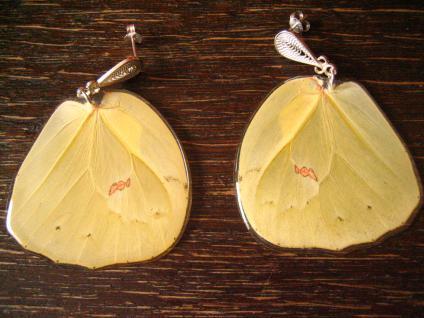 Schätze der Natur Ohrringe Hänger Schmetterlingsflügel 925er Silber Eco Friendly