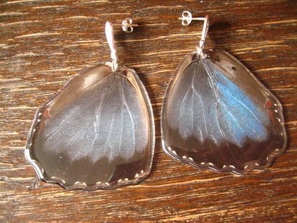 Schätze der Natur Ohrringe Schmetterlingsflügel C 925er Silber Eco Friendly