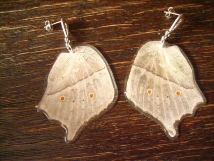 Schatz der Natur Ohrringe mit Schmetterlingsflügel B 925er Silber Eco Friendly