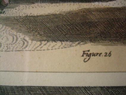 Antoine De Pluvinel Barock Reiten Bild Kupferstich colorierter Stich gerahmt 26 - Vorschau 5