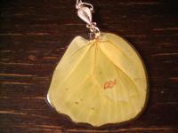 Schätze der Natur Anhänger Schmetterlingsflügel 925er Silber Kette Eco Friendly