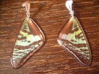 Schätze der Natur Ohrringe Schmetterlingsflügel H 925er Silber Eco Friendly