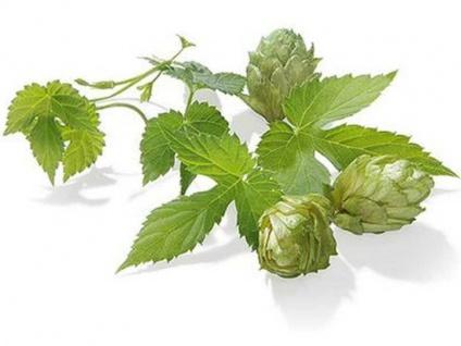 Hopfen Rohhopfen Northern Brewer 8, 5% alpha 250g Aromahopfen zum Bier brauen