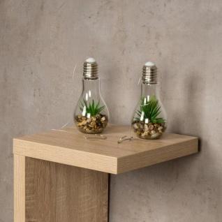 2er Set Sukkulenten Glühbirne Glas je B x H 8 x 19cm Deko LED Lampe Kunstpflanze - Vorschau 5