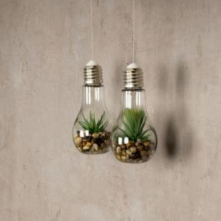 2er Set Sukkulenten Glühbirne Glas je B x H 8 x 19cm Deko LED Lampe Kunstpflanze - Vorschau 4