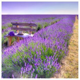 levandeo Glasbild 30x30cm Wandbild Glas Lavendel Feldweg Landschaft Deko