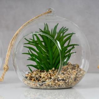 4er Set Sukkulenten Glas 10x12cm Pflanze Grün Tischdeko Kunstpflanze Deko - Vorschau 5