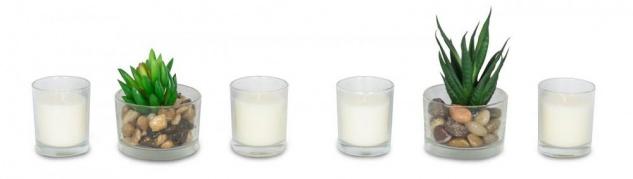 Duftkerze Geschenkset Vanille Lemongras Düfte Kerzen Sukkulenten Deko - Vorschau 4